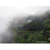 Queshe - langues de moineau - Huangshan Anhui 10gr